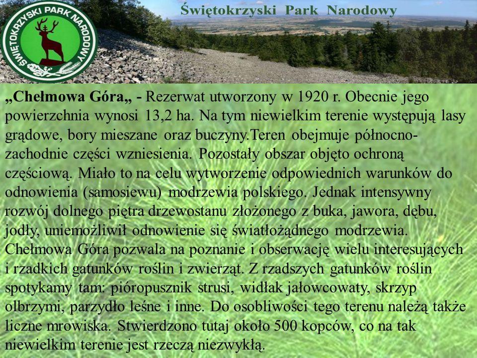 """""""Chełmowa Góra"""" - Rezerwat utworzony w 1920 r"""
