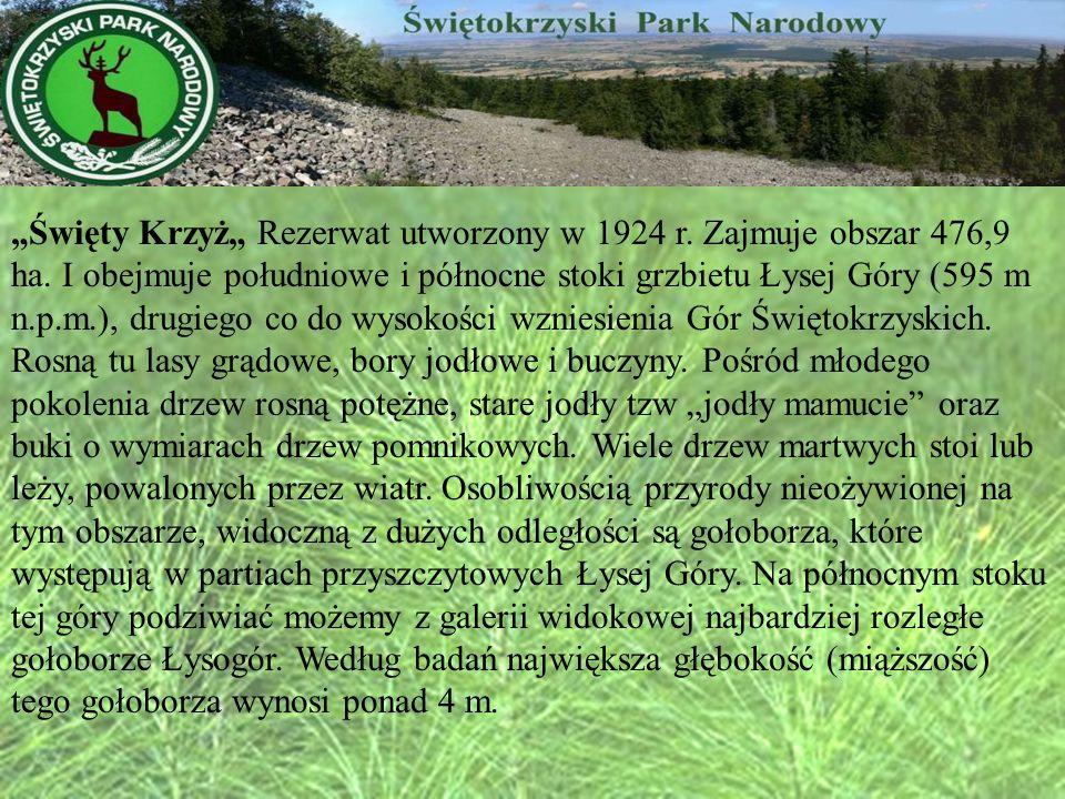 """""""Święty Krzyż"""" Rezerwat utworzony w 1924 r. Zajmuje obszar 476,9 ha"""