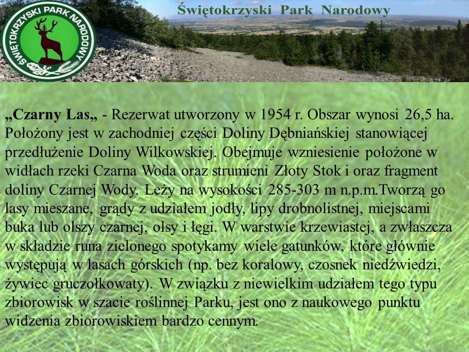 """""""Czarny Las"""" - Rezerwat utworzony w 1954 r. Obszar wynosi 26,5 ha"""