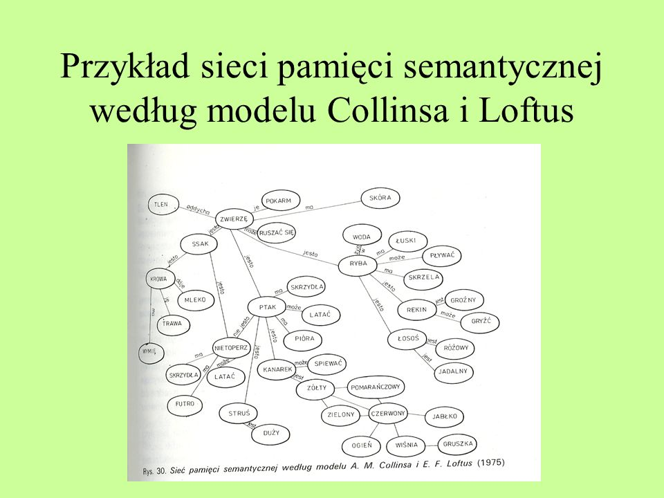 Przykład sieci pamięci semantycznej według modelu Collinsa i Loftus