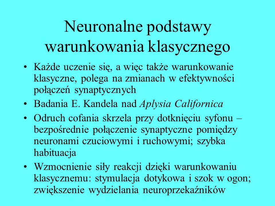 Neuronalne podstawy warunkowania klasycznego