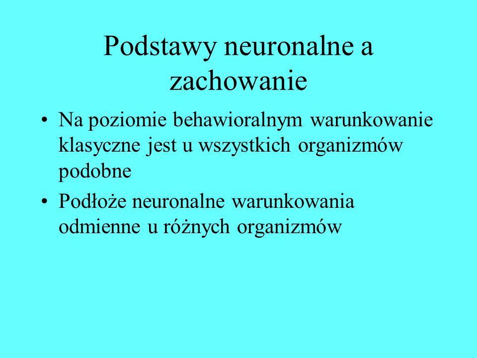 Podstawy neuronalne a zachowanie