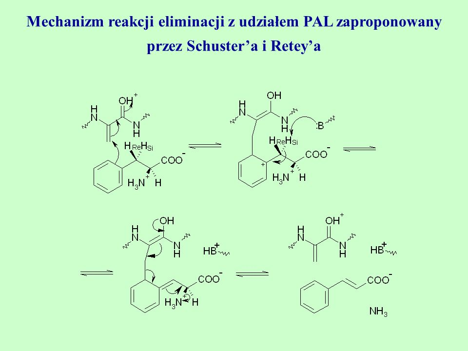 Mechanizm reakcji eliminacji z udziałem PAL zaproponowany przez Schuster'a i Retey'a