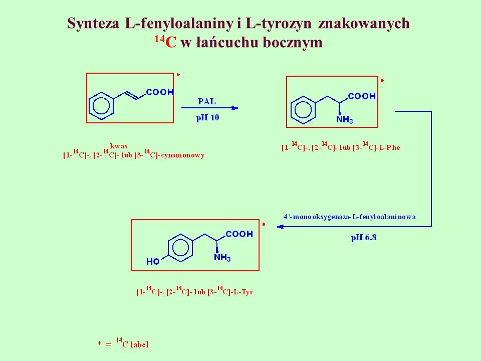 Synteza L-fenyloalaniny i L-tyrozyn znakowanych