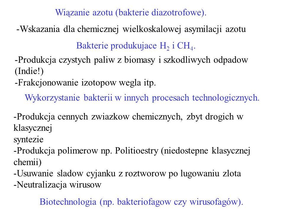 Wykorzystanie bakterii w innych procesach technologicznych.