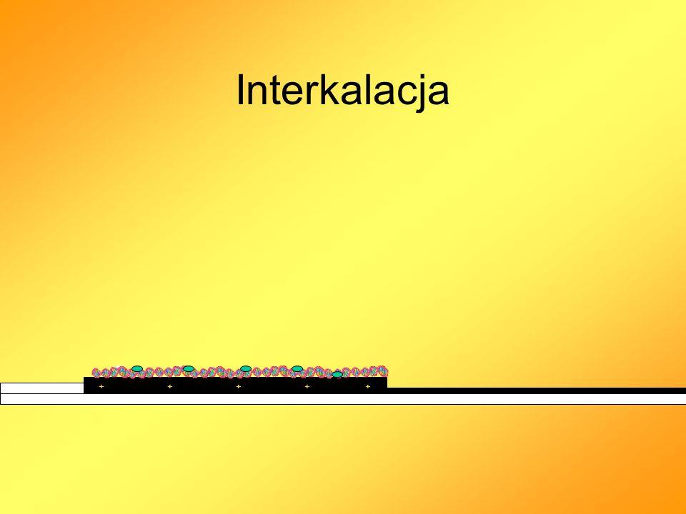 Interkalacja + + + + +