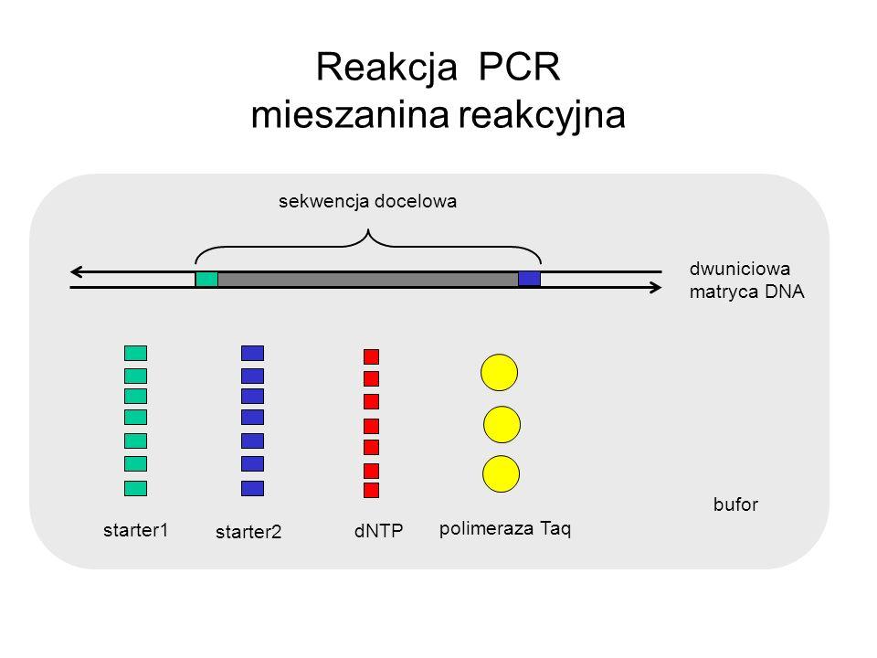 Reakcja PCR mieszanina reakcyjna bufor dwuniciowa matryca DNA