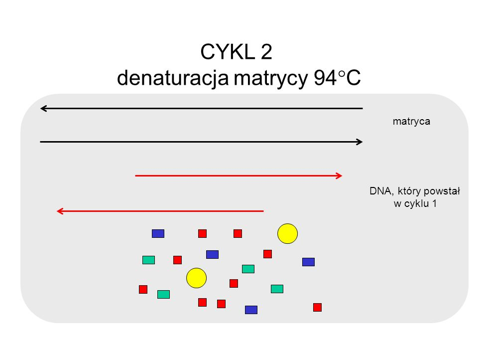 denaturacja matrycy 94C