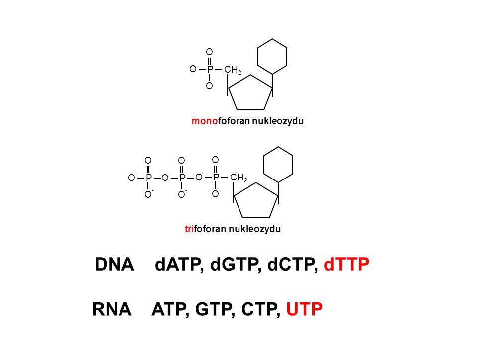 DNA dATP, dGTP, dCTP, dTTP RNA ATP, GTP, CTP, UTP CH2 P O O-