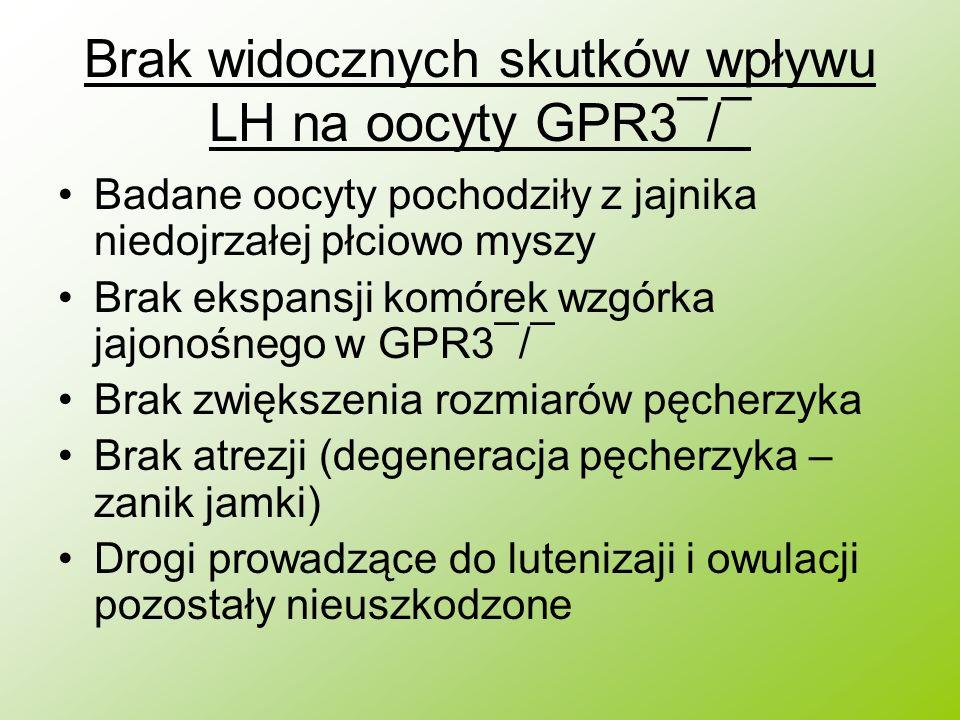 Brak widocznych skutków wpływu LH na oocyty GPR3¯/¯