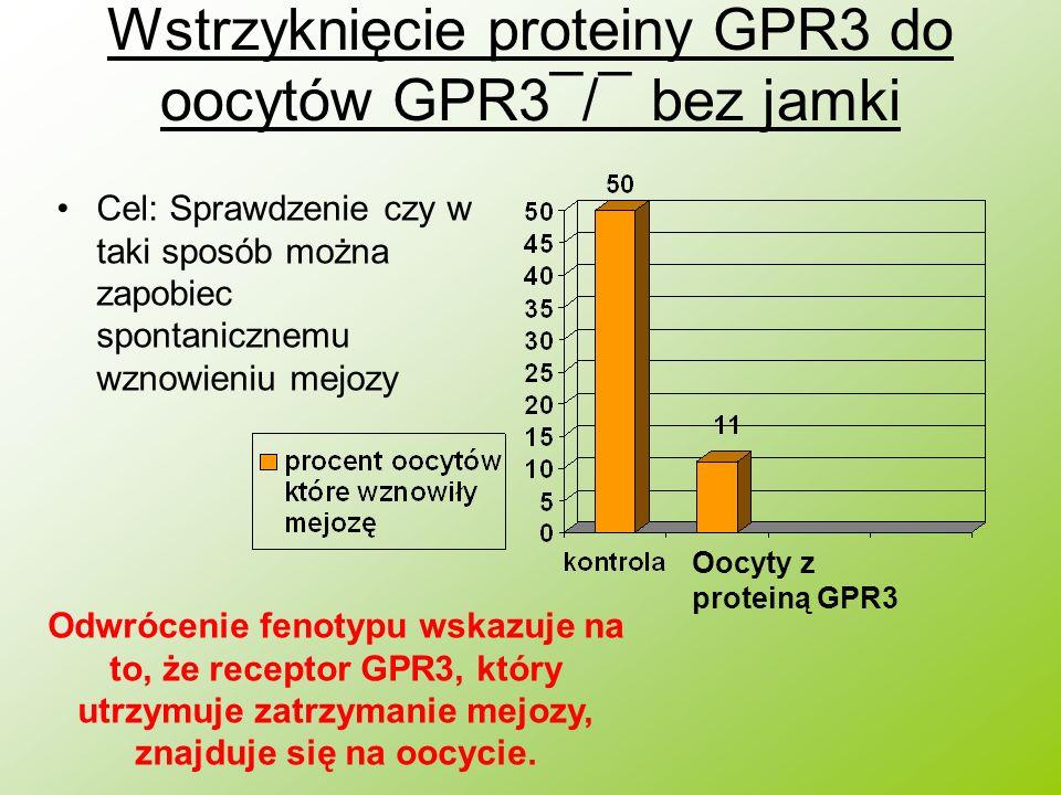 Wstrzyknięcie proteiny GPR3 do oocytów GPR3¯/¯ bez jamki