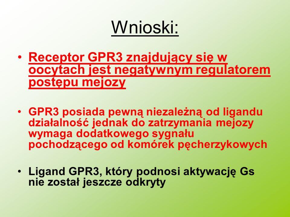 Wnioski: Receptor GPR3 znajdujący się w oocytach jest negatywnym regulatorem postępu mejozy.