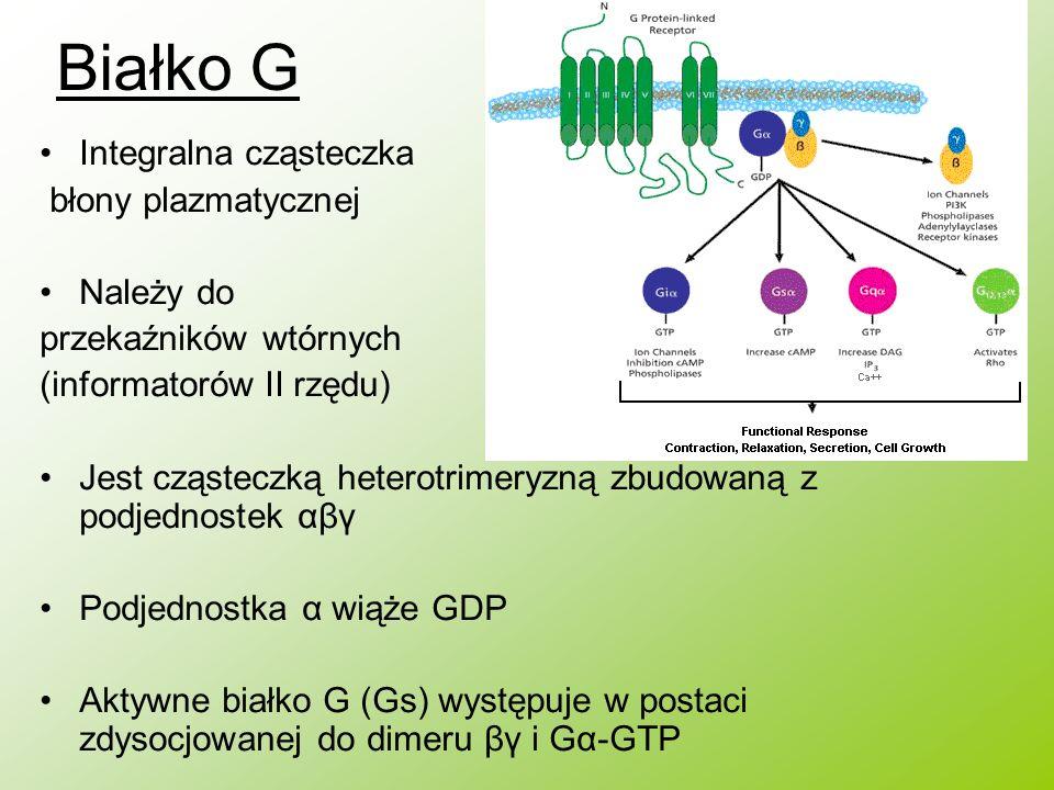 Białko G Integralna cząsteczka błony plazmatycznej Należy do