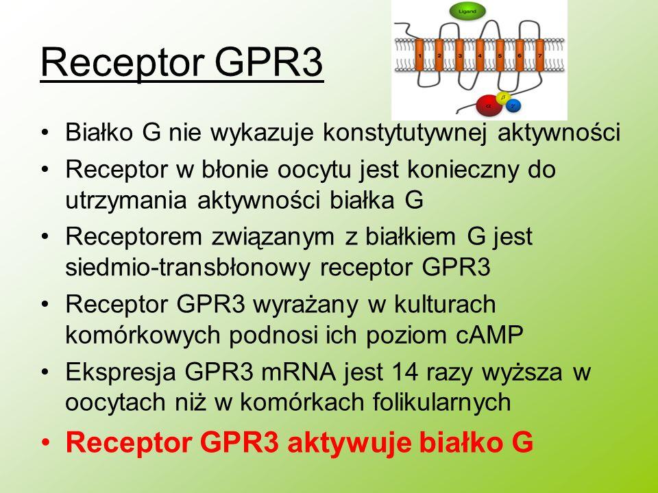 Receptor GPR3 Receptor GPR3 aktywuje białko G