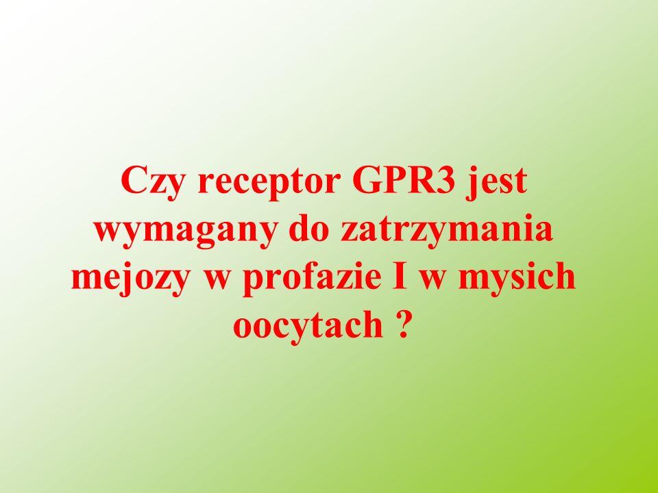 Czy receptor GPR3 jest wymagany do zatrzymania mejozy w profazie I w mysich oocytach