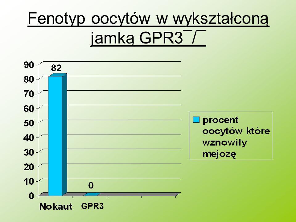 Fenotyp oocytów w wykształconą jamką GPR3¯/¯