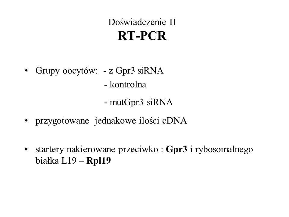 Doświadczenie II RT-PCR