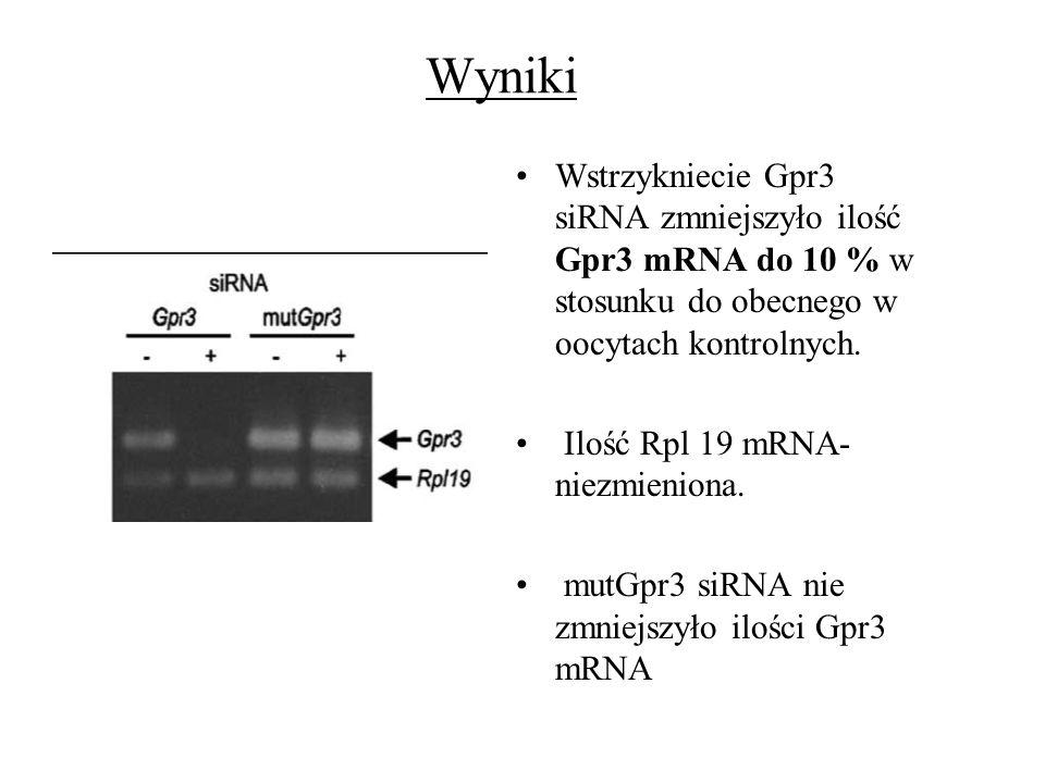 Wyniki Wstrzykniecie Gpr3 siRNA zmniejszyło ilość Gpr3 mRNA do 10 % w stosunku do obecnego w oocytach kontrolnych.