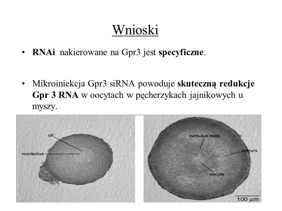 Wnioski RNAi nakierowane na Gpr3 jest specyficzne.