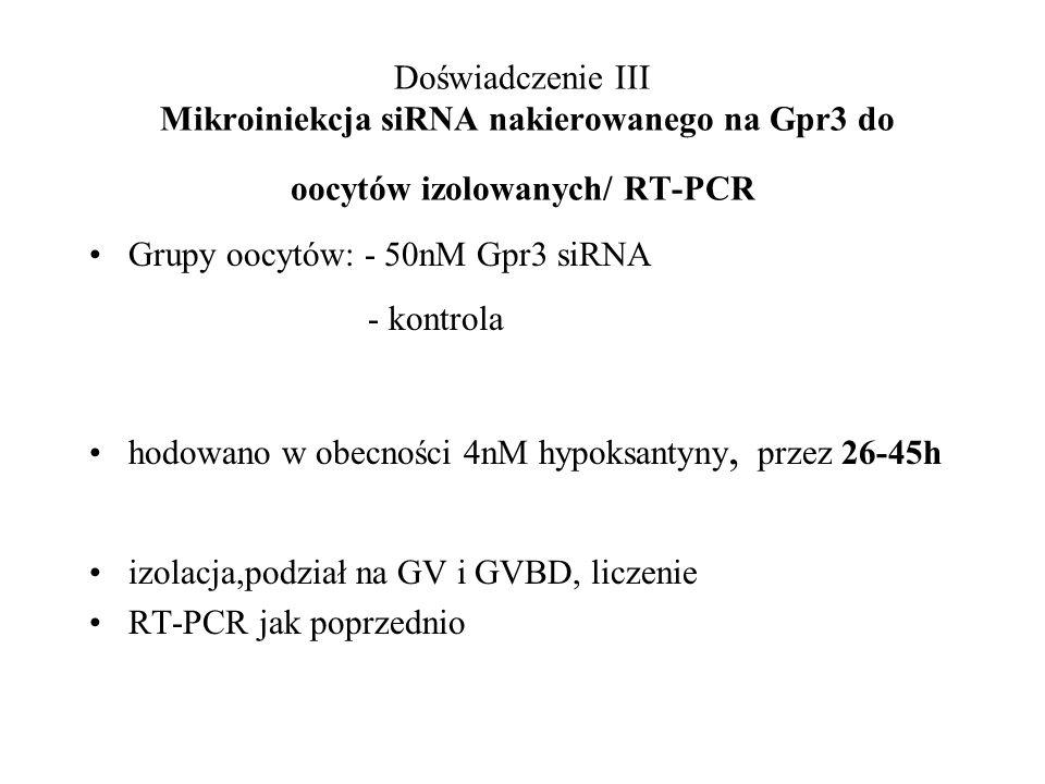 Doświadczenie III Mikroiniekcja siRNA nakierowanego na Gpr3 do oocytów izolowanych/ RT-PCR