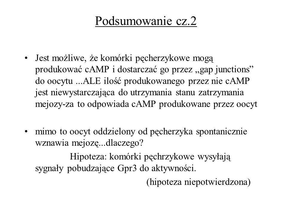 Podsumowanie cz.2
