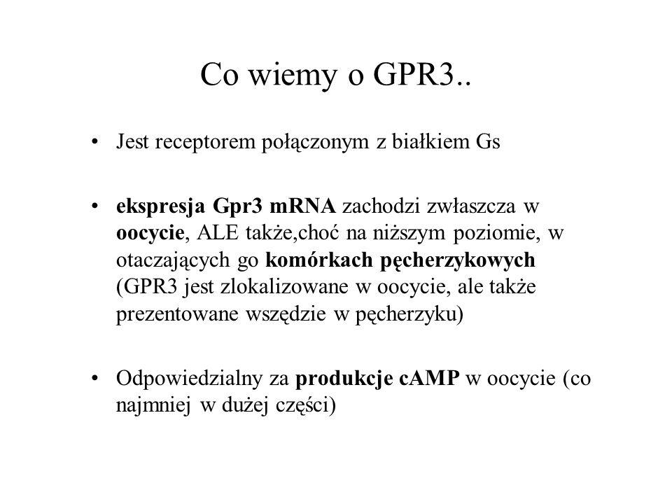 Co wiemy o GPR3.. Jest receptorem połączonym z białkiem Gs