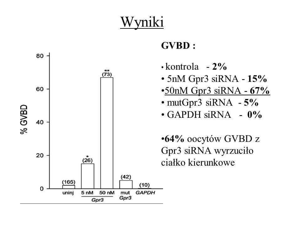 Wyniki GVBD : 5nM Gpr3 siRNA - 15% 50nM Gpr3 siRNA - 67%