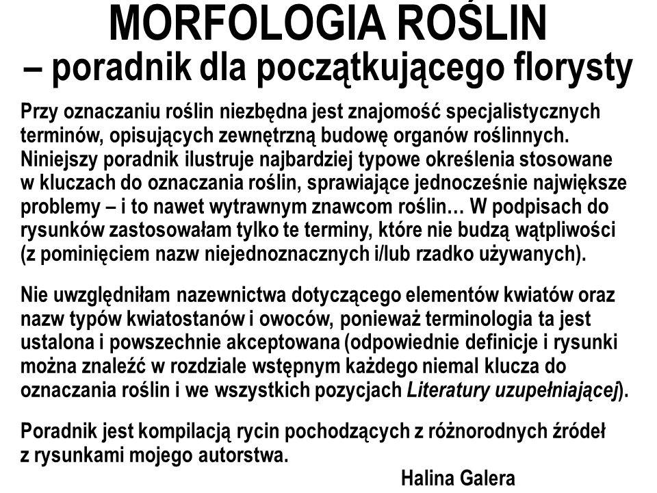 MORFOLOGIA ROŚLIN – poradnik dla początkującego florysty