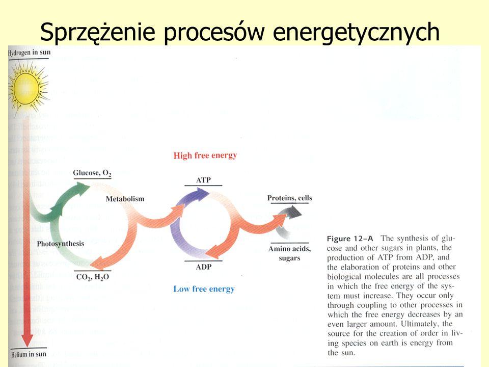 Sprzężenie procesów energetycznych
