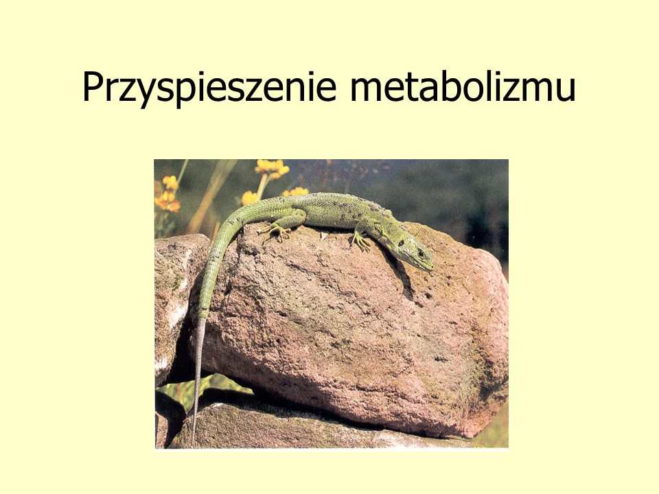 Przyspieszenie metabolizmu