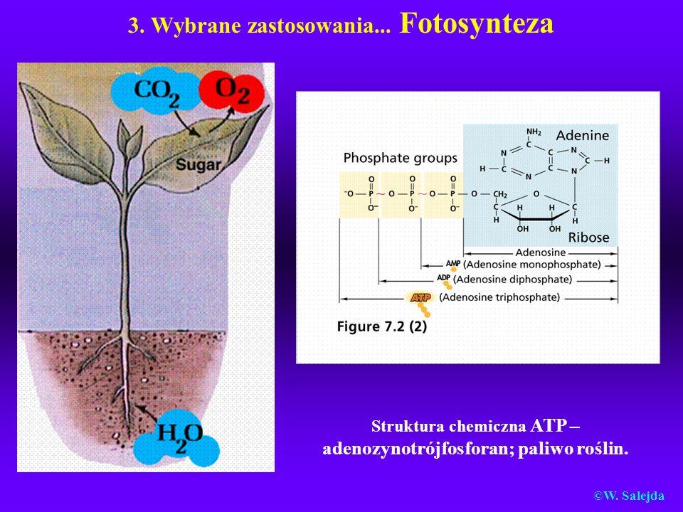 3. Wybrane zastosowania... Fotosynteza