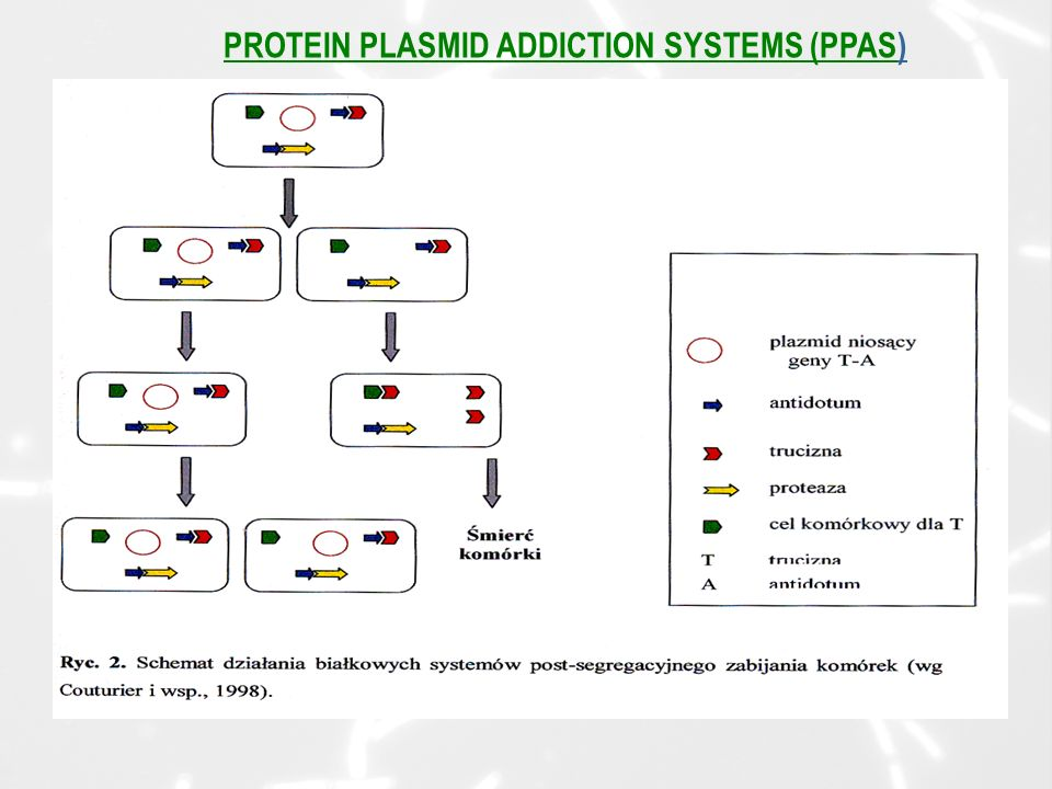 PROTEIN PLASMID ADDICTION SYSTEMS (PPAS)