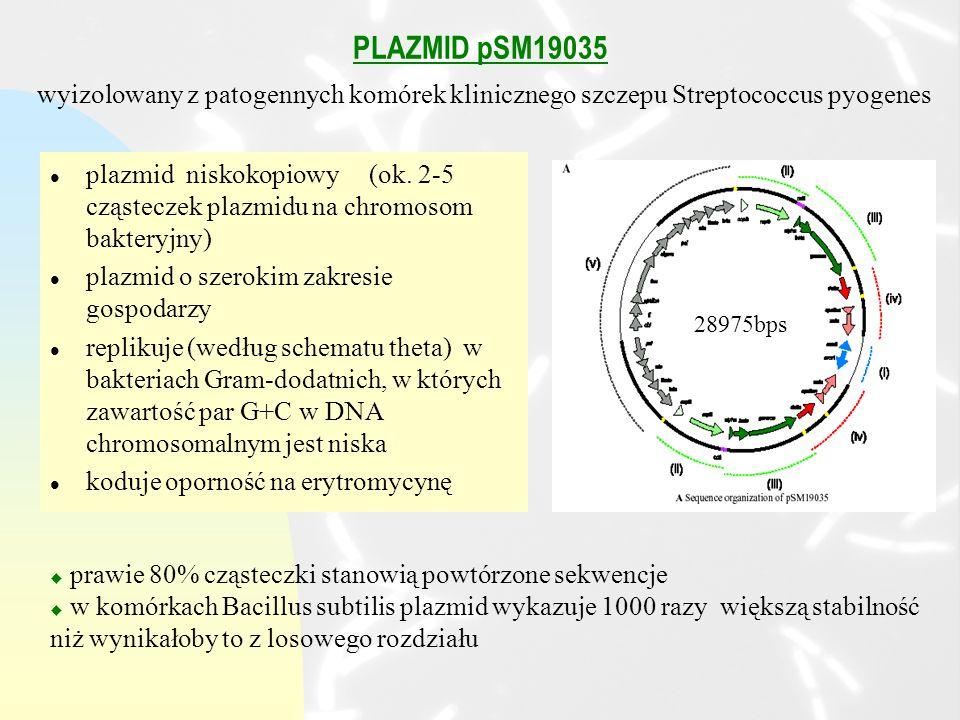 PLAZMID pSM19035 wyizolowany z patogennych komórek klinicznego szczepu Streptococcus pyogenes.