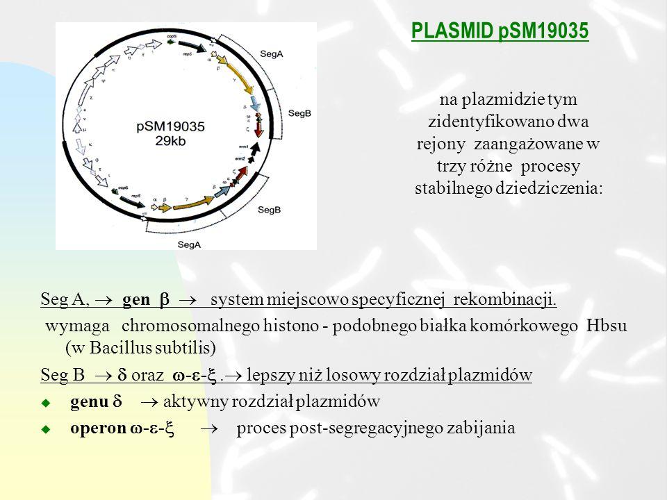 PLASMID pSM19035 na plazmidzie tym zidentyfikowano dwa rejony zaangażowane w trzy różne procesy stabilnego dziedziczenia: