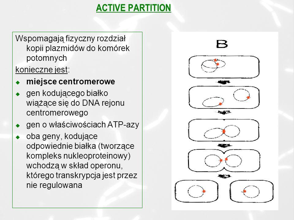 ACTIVE PARTITION Wspomagają fizyczny rozdział kopii plazmidów do komórek potomnych. konieczne jest: