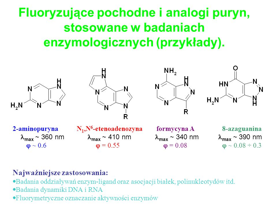 Fluoryzujące pochodne i analogi puryn, stosowane w badaniach enzymologicznych (przykłady).