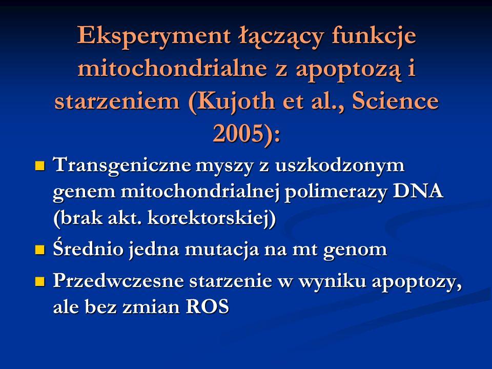 Eksperyment łączący funkcje mitochondrialne z apoptozą i starzeniem (Kujoth et al., Science 2005):