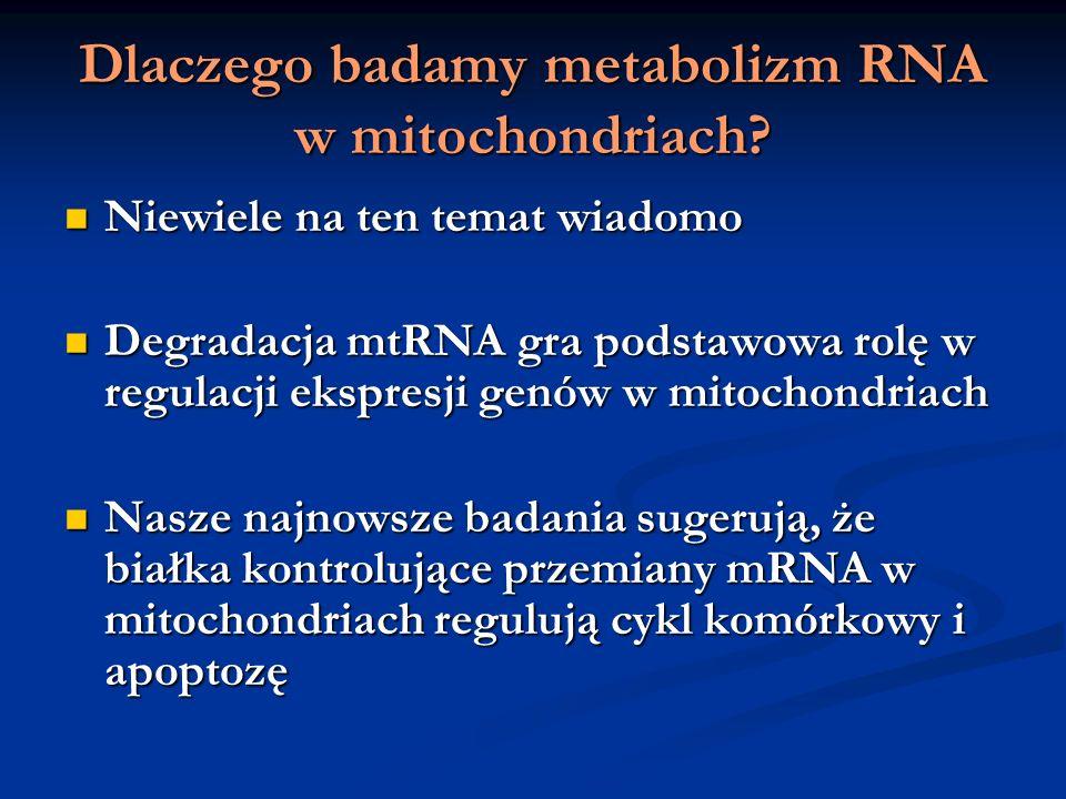 Dlaczego badamy metabolizm RNA w mitochondriach