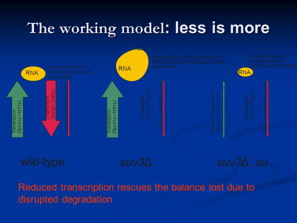 The working model: less is more