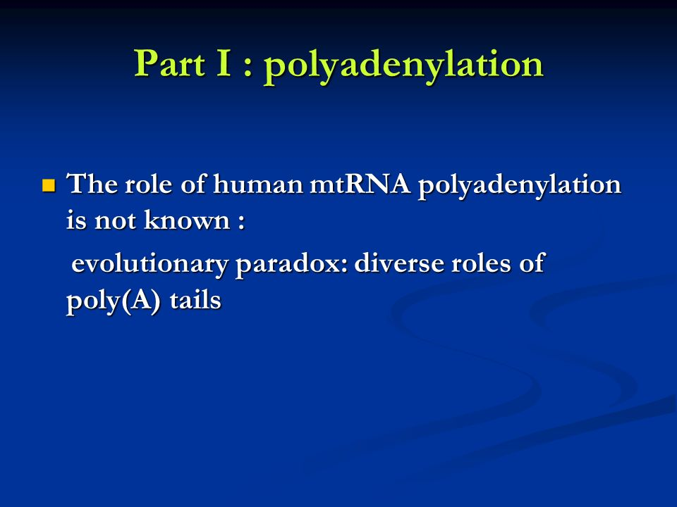 Part I : polyadenylation