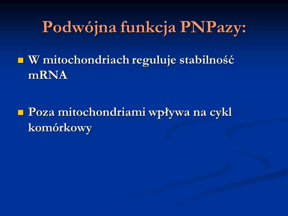 Podwójna funkcja PNPazy:
