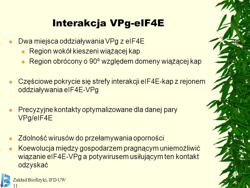 Interakcja VPg-eIF4E Dwa miejsca oddziaływania VPg z eIF4E