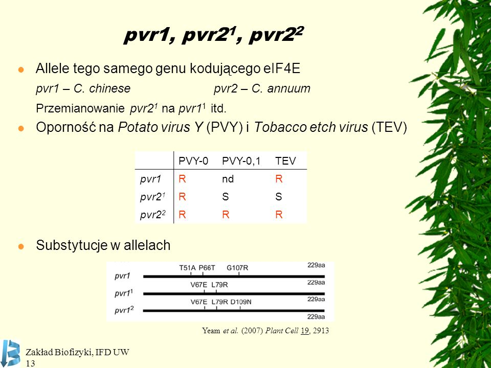 pvr1, pvr21, pvr22 Allele tego samego genu kodującego eIF4E