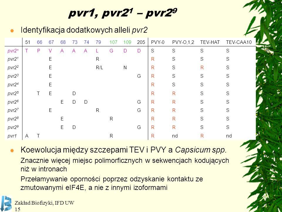 pvr1, pvr21 – pvr29 Identyfikacja dodatkowych alleli pvr2