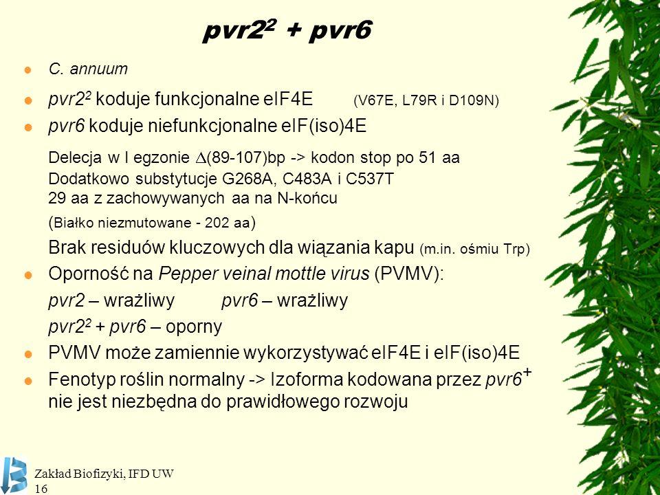 pvr22 + pvr6 C. annuum. pvr22 koduje funkcjonalne eIF4E (V67E, L79R i D109N) pvr6 koduje niefunkcjonalne eIF(iso)4E.