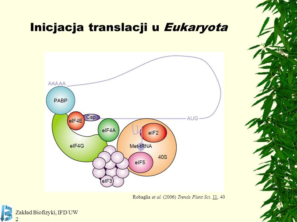 Inicjacja translacji u Eukaryota