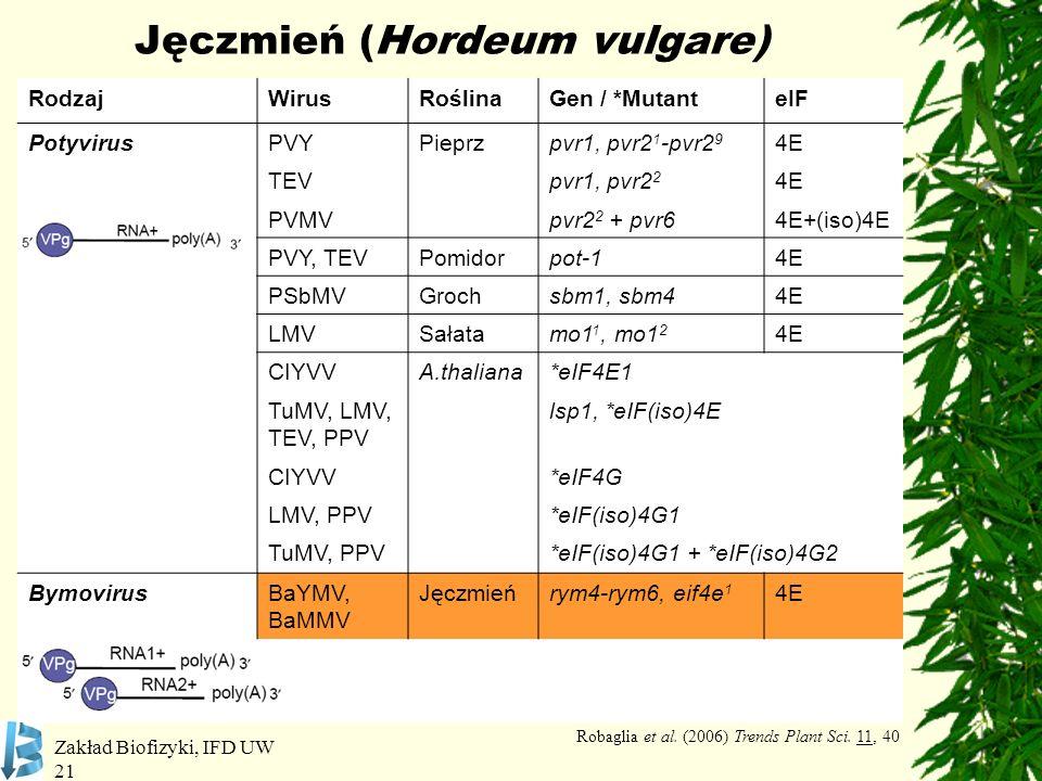 Jęczmień (Hordeum vulgare)