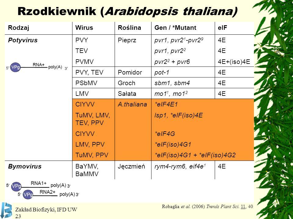 Rzodkiewnik (Arabidopsis thaliana)