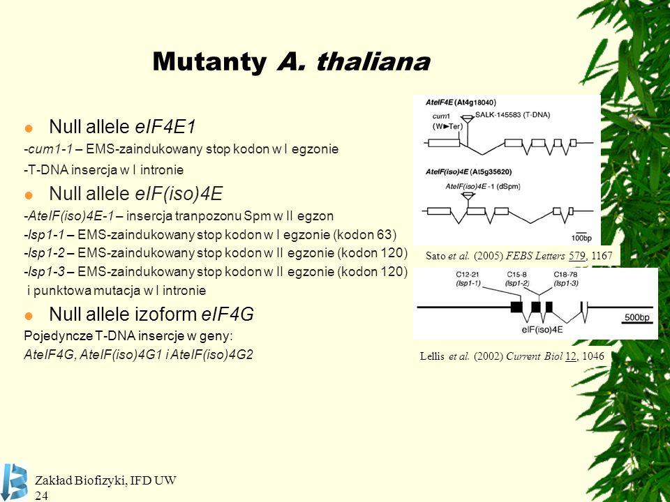 Mutanty A. thaliana Null allele eIF4E1 Null allele eIF(iso)4E