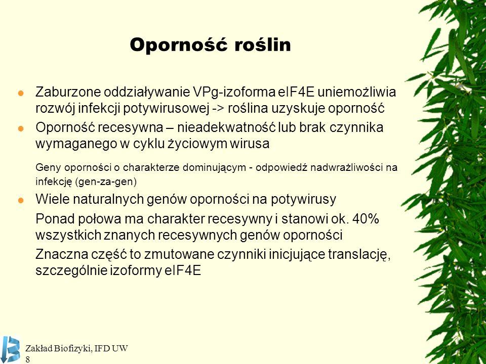 Oporność roślin Zaburzone oddziaływanie VPg-izoforma eIF4E uniemożliwia rozwój infekcji potywirusowej -> roślina uzyskuje oporność.